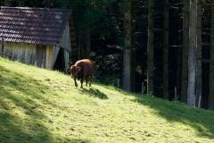 Tierischer Bewohner im Tiefenbachtal