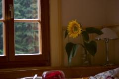Sonne im Haus