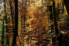 Herbst im Tiefenbachtal