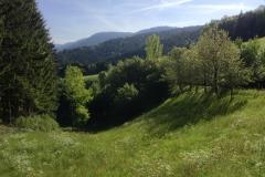 Im Holdersbach