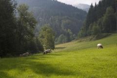 Im Tiefenbachtal_klein (1)